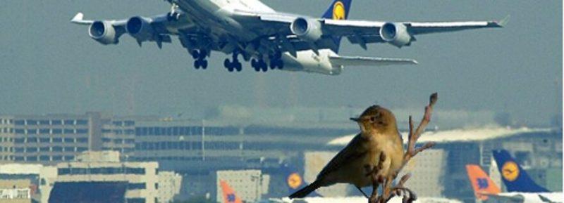 birdsarounda